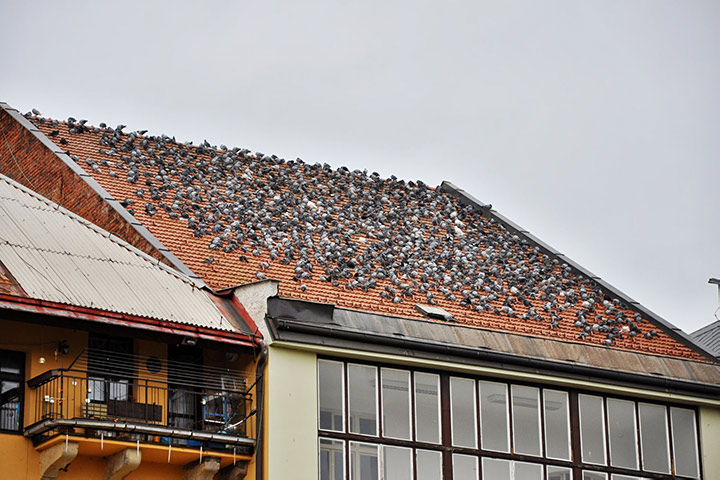 A2B Pest Control are able to install spikes to deter birds from roofs in Friern Barnet.