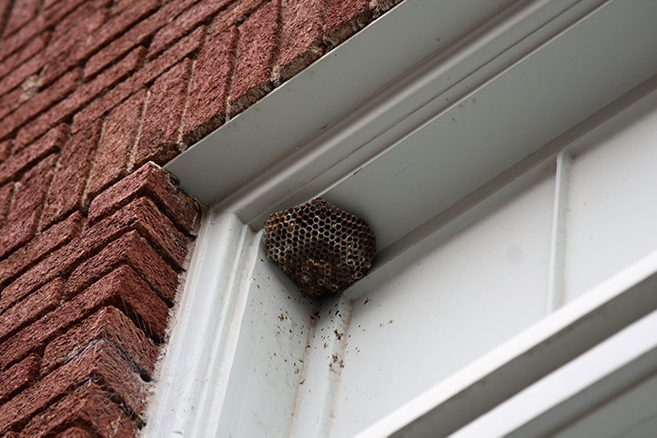 We provide a wasp nest removal service for domestic and commercial properties in Friern Barnet.